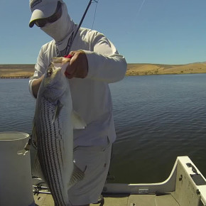 Full house on labor day at the forebay for San luis reservoir fishing report