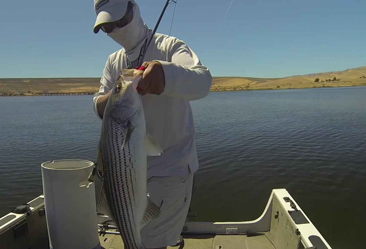 Full house on labor day at the forebay for San luis reservoir fishing